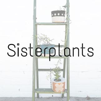 Sisterplants